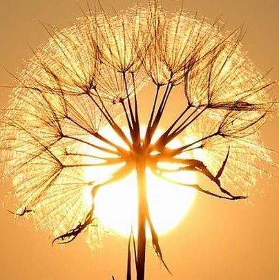 Солнце светит всем