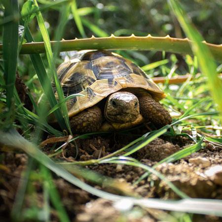 Всемирный день черепах. Мастер-класс